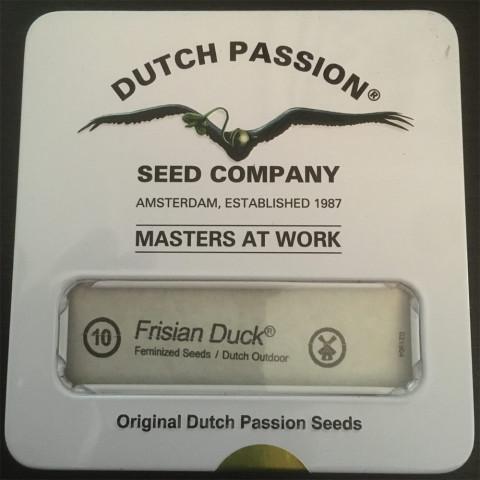 Dutch Passion - Frisian Duck