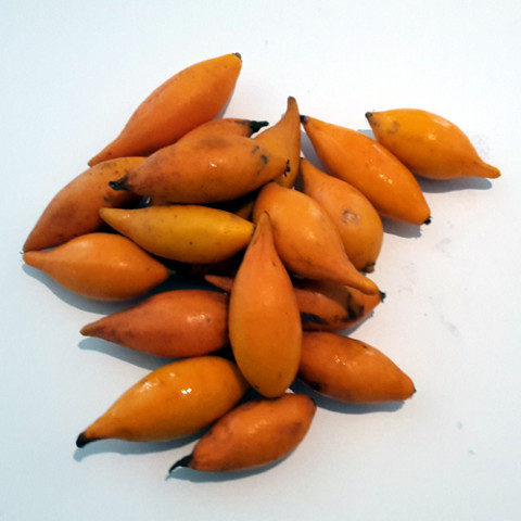 Iboga Frucht