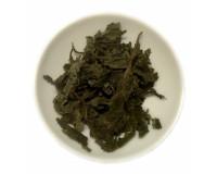 Salvia divinorum Blätter